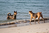 The Confront Beach Dogs