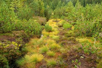 Piller Moor - Piller Swamp 14