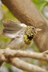 Kenia Vogel Abflug