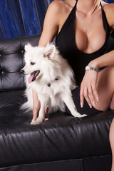 White dog and attractive sexy woman in black dress