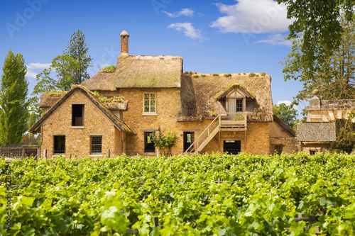 Traditional vineyard and farm in Versailles Chateau, France