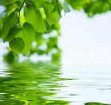 Fototapety Tilleul sur l'eau