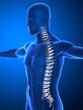 Human spine with  invertebral discs