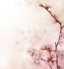 Spring Blossoms border