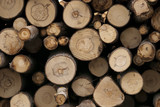 Pile of hardwood logs waiting for transportation poster