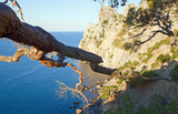 withered juniper tree branch and coastline behind poster