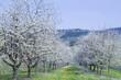 Frühling im Renchtal