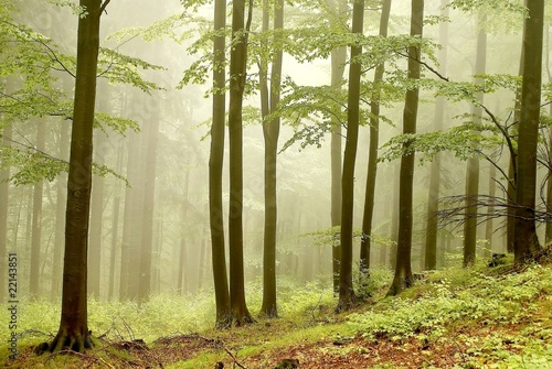 Foto op Canvas Bos in mist Misty autumn woods