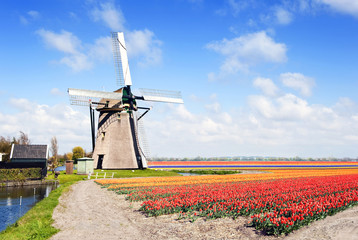 Windmill and flower fields