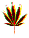 Color marihuana leafs