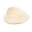 Leinwanddruck Bild - Sea Shell