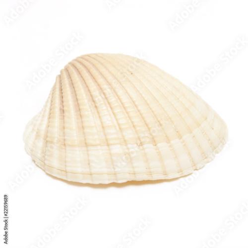 Leinwanddruck Bild Sea Shell