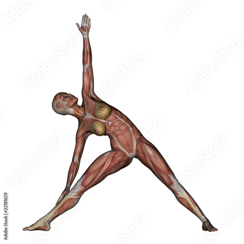 Yoga - Triangle Pose. Female Muscles