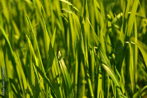 Fresh green grass texture close up