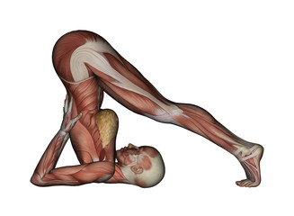 Yoga - Plow Pose. Female Muscles