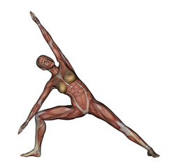 Yoga - Side Angle Pose. Female Muscles