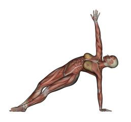 Yoga - Side Balance Pose. Female Muscles