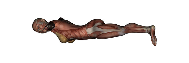 Yoga - Half Moon Pose. Female Muscles