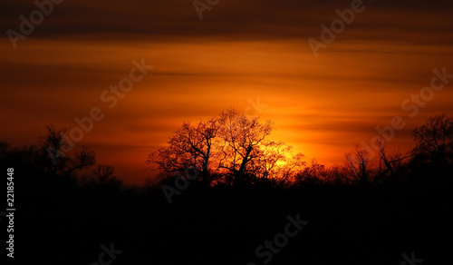 Beautiful sunset and tree silhouette under forest