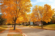 Residential Neighborhood in Autumn - 22185628