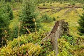 Piller Moor - Piller Swamp 18