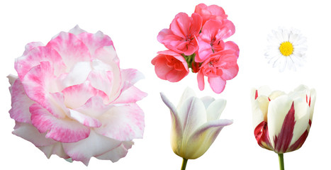 Variety of flowers isolated on white