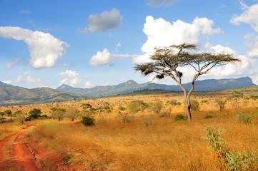 Akazie in Taita Hills