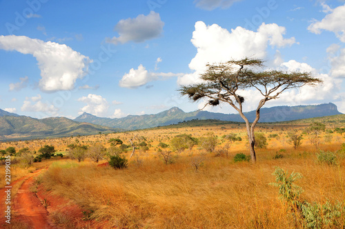 Fototapeten,akazie,kenya,savanne,hügel