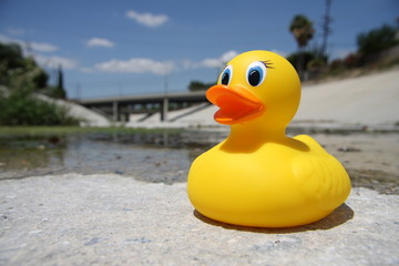 rubber ducky in the los angeles river 4