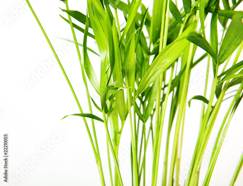 Plant isolated on white background.
