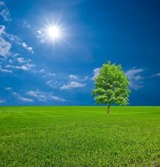 green tree in a spring field