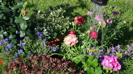 im Garten zu Hause beim Blumen gießen