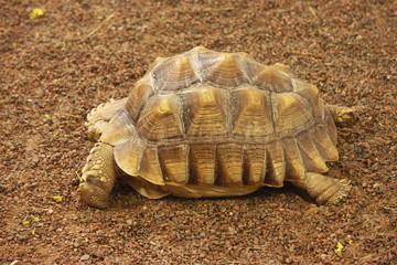 Frightened turtle