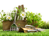 Fototapety Fresh herbs in wooden box on grass