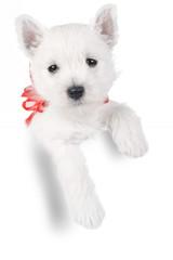 cute puppy in present box