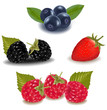 Raspberries, blueberries, blackberries and strawberry