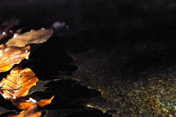 Hojas de haya en el agua
