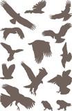 Birds predator poster