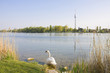 An der Alten Donau
