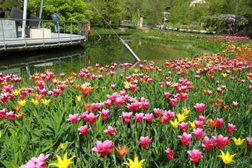giardino con tulipani