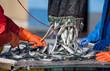 sardine maquereau poisson pêche marin pêcheur port bretagne file - 22281440