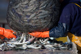 poisson pêche pêcheur marin sardine maquereau cirée ciré bretagn poster