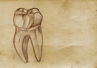 Tooth Illustration (from late 1800)