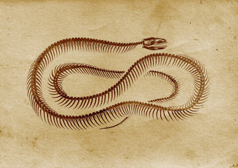 Vintage Snake (late 1800 illustration)