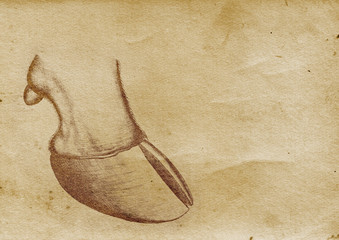 Hoof Illustration (from late 1800)