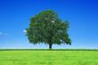 Schöner Baum in der Landschaft