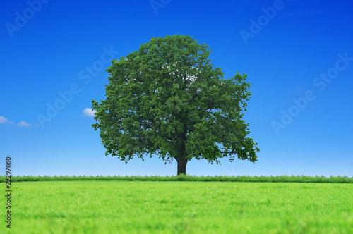 Fototapeten,baum,wald,natur,landschaft