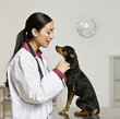 Hispanic female veterinarian petting dog