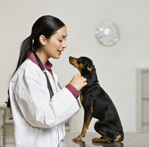 Hispanic female veterinarian petting dog