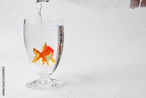 goldfisch im glas jungbrunnen von wunderbild lizenzfreies foto 22301855 auf. Black Bedroom Furniture Sets. Home Design Ideas